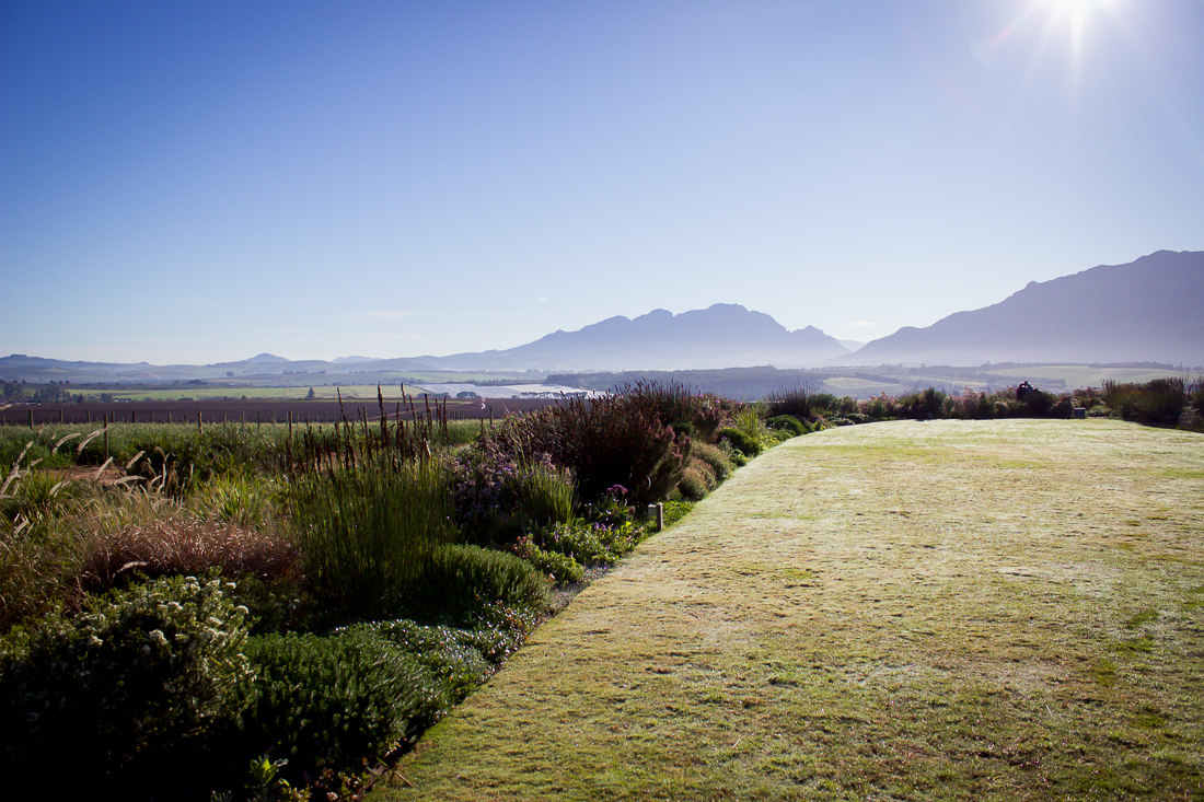 The natural beauty of Stellenbosch was enough to inspire the judges and film crew all day!