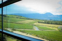 The view from the restaurant of the Waterkloof vineyards.